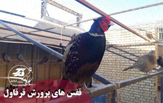 photo_2020-08-13_04-14-45